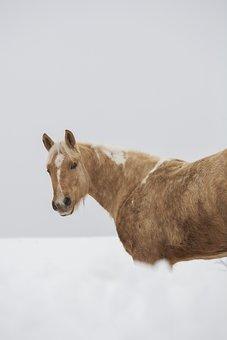 Horse, Dog, White, Black, Yellow, Pinto, Grasshopper