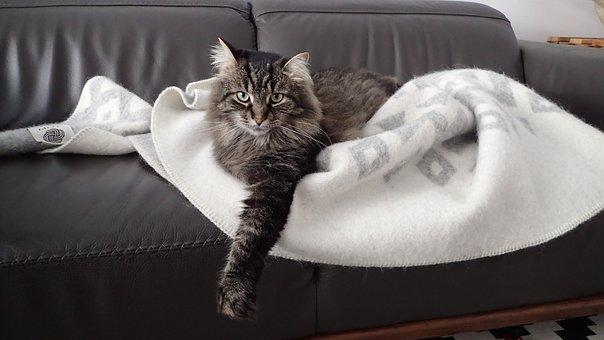 Cat, Neutral, Animal, Feline, Looking