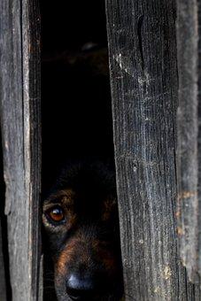 Dog, Scared Dog, Animal, Hide, Hidden