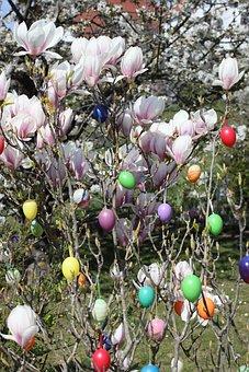 Easter, Easter Eggs, Magnolia, Easter Bush, Blossom