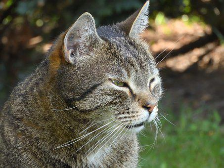 Cat, Face, Domestic Cat, Cat Face, Garden, Expression