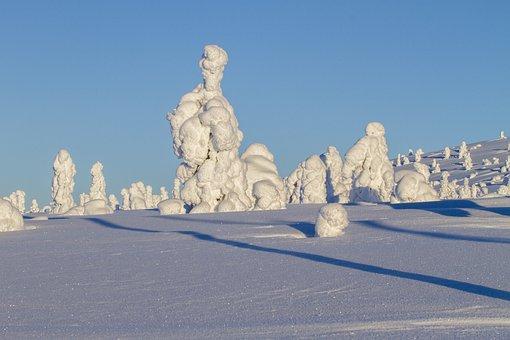 Finland, Lapland, Wintry, Winter Tree