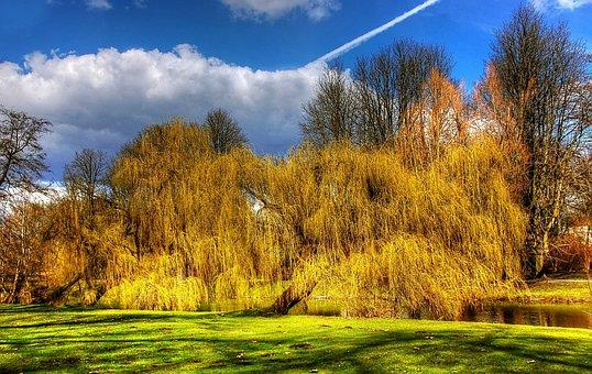 Braunschweig, Park, Forest, Germany, Nature, Landscape
