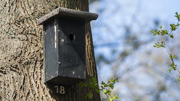 Nest Box, Birdhouse, Forest, House, Nature, Spring