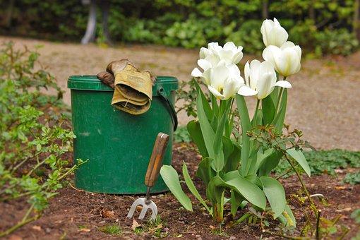 Garden, Gardening, Garden Tools, Bucket, Plant, Tulips