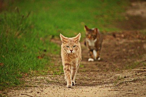 Cat, Mieze, Mackerel Tabby, Grass, Away, Nature