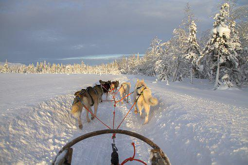 Finland, Lapland, Wintry, Dog Sled, Snow