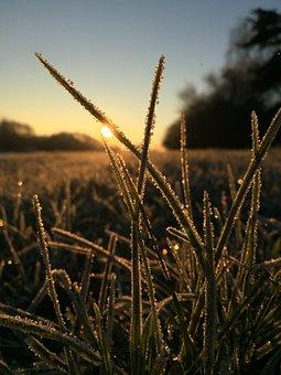 Grass, Close, Grasses, Nature, Sunrise, Early Maturing