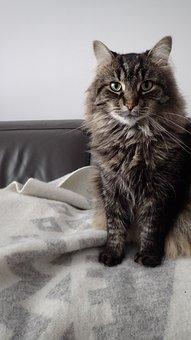 Cat, Neutral, Animal, Portrait