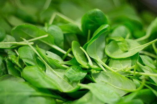 Spinach, Plant, Nutrition, Eat, Frisch, Healthy, Bio