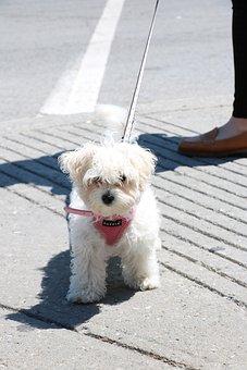 Puppy, Adorable, Dog, Pet, Animal, Cute, Summer