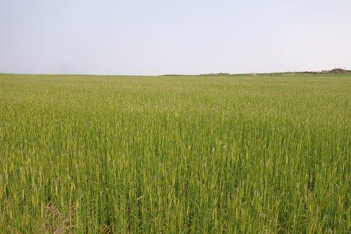 Cheongbori, Field, Nature, Landscape, Sky, Plants