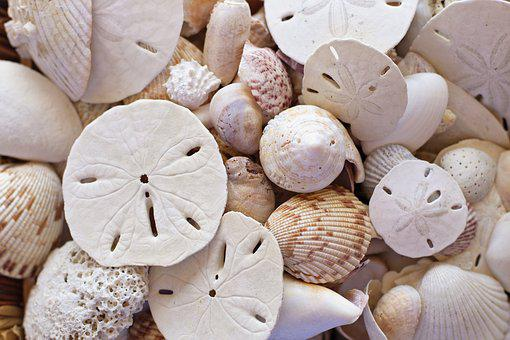Shells, Beach, Seaside, Sand Dollars, Sea, Summer, Sand