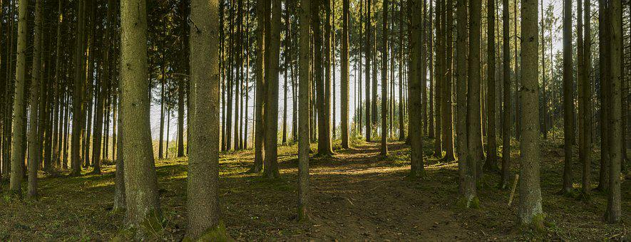 Panorama, Forest, Away, Trail, Trees, Tree Trunks