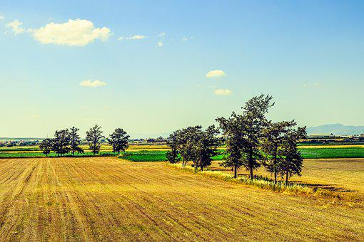Landscape, Rural, Countryside, Field, Trees
