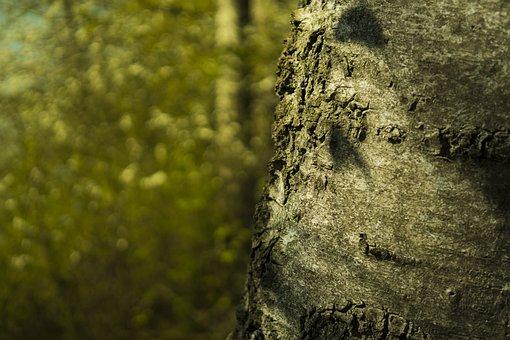 Tree, Log, Bark, Nature, Tribe, Wood, Tree Bark, Birch