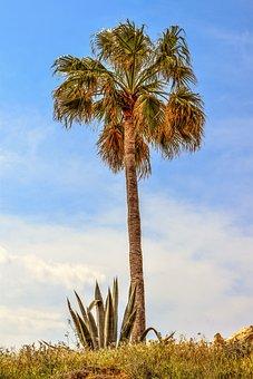 Palm Tree, Aloe Vera, Garden, Nature, Landscape