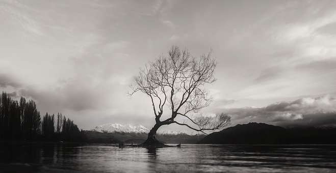 Black And White, Wanaka, Tree, Isolated, Alone
