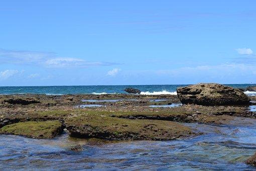 Beach, Mar, Sol, Salvador, Bahia, Brazil, Beira Mar