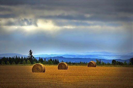 Landscape, Hay, Field, Fields, Pre, Balls, Wheat