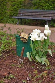 Gardening, Landscape Gardener, Gardener, Bucket