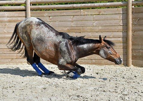 Horse, Kneel, On Your Knees