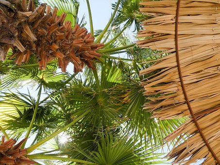 Palm Trees, Palm Leaf, Straw Screen