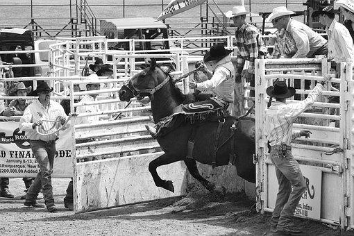 Rodeo, Men, Horses, Cowboy, Man, Rider, Western, Animal