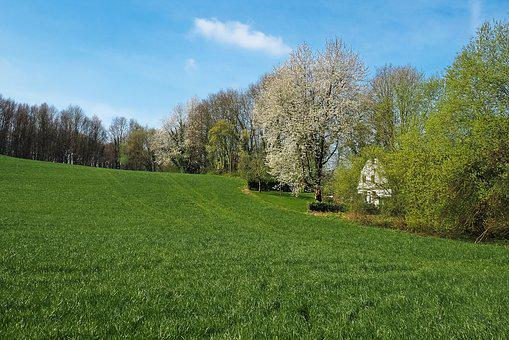 Landscape, Field, Nature, Agriculture, Spring, Meadow