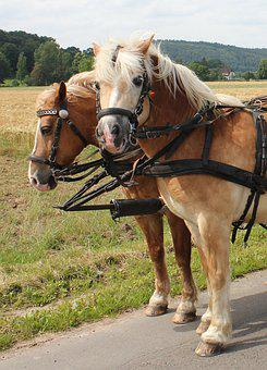Horses, Team, Horse Drawn Carriage, Ross, Wagon, Animal