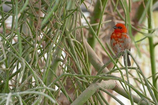 Bird, Stunding, Loveit