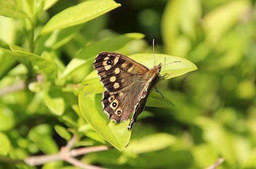 Spring, Bug, Butterfly, Bush, Antennas, Eyes