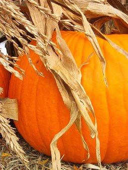 Pumpkin, Harvest, Fall, October, Cornstalks, Decorative