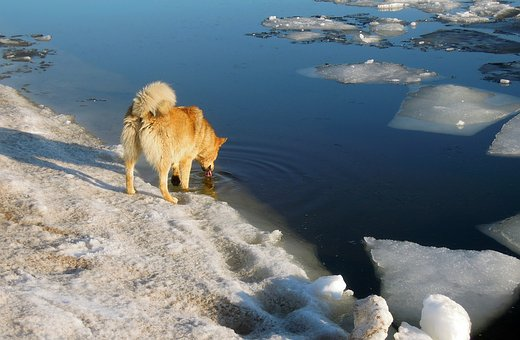 Spring, The Ice Is Melting, Dog, Red Dog