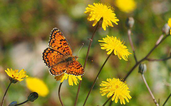 Nature, Butterfly, Flowers, Macro