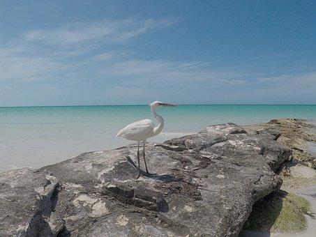 Heron, Bird, Seabird, Sealife, Mexico, Holbox Island