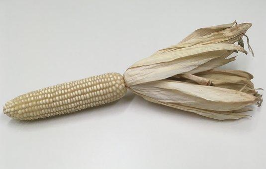 Corn, Corncob, Food, Maize, Kernel, White, Grain, Crop