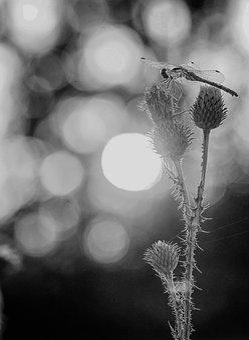 Sunset, Wildflowers, Nature, Field, Landscape, Meadow