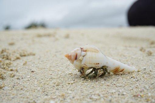 Beach, Crab, Cancer, Meeresbewohner, Nature