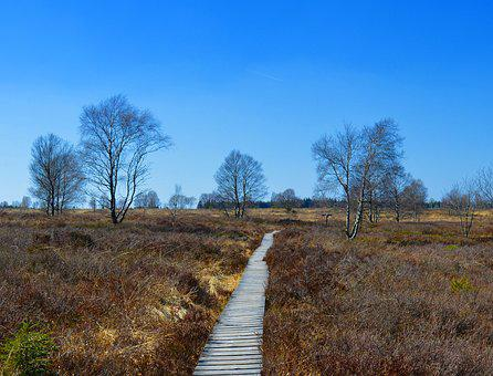 Moor, Peat Bog, Venn, High Venn, Nature Conservation