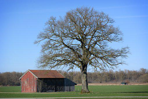 Landscape, Nature, Chiemgau, Upper Bavaria, Tree, Barn
