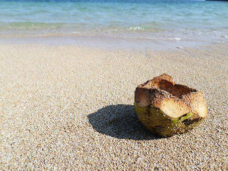 Coconut, Asia, Fruit, Open