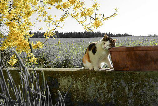 Cat, Landscape, Yellow, Branch, Spring Blossom