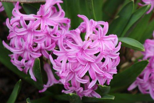 Easter, Lilac Easter Flowers, Springtime, Spring, Bloom