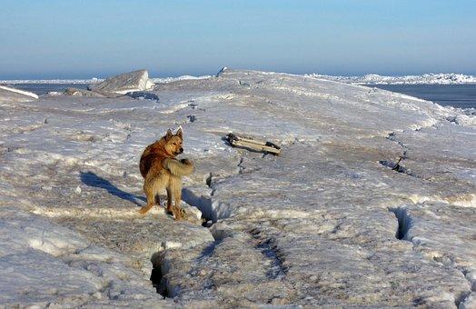 Dog, Views, View, Pets, Man's Best Friend, Mutts, Snow