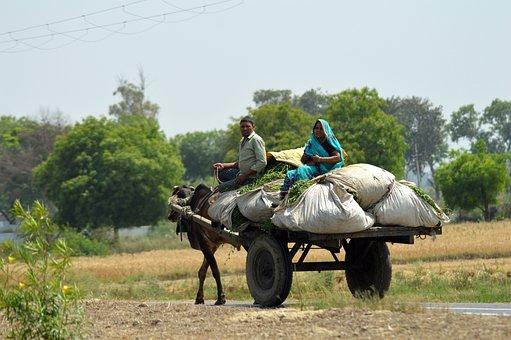 Bullock Cart, Village, India