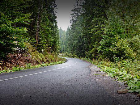 Hargita, Pine, Forest, Rout, Road, Curvature, Bend