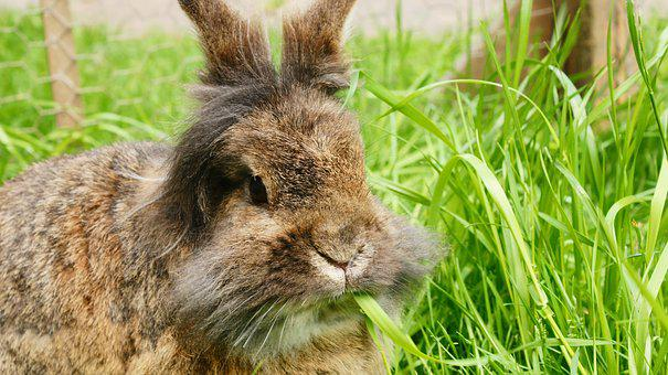 Rabbit, Grass, Spring, Bunny, Green, Cute, Animal