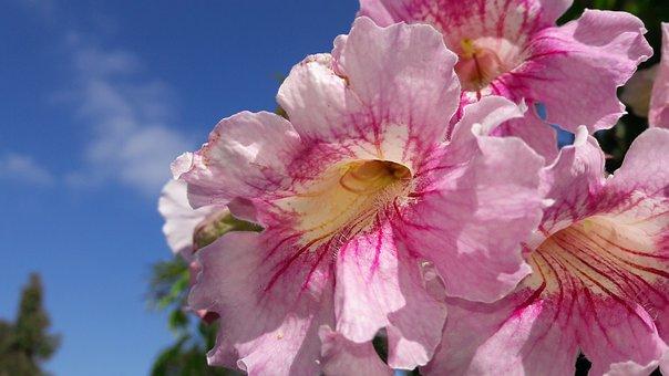 Vine Florida Plant, Morocco, Flower, Botany, Plant