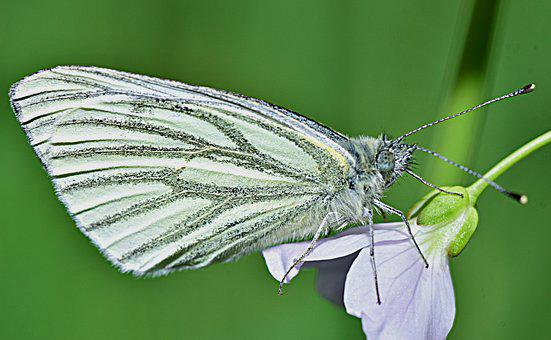 Nature, Butterfly, Garden, Wings, Insect, Beauty